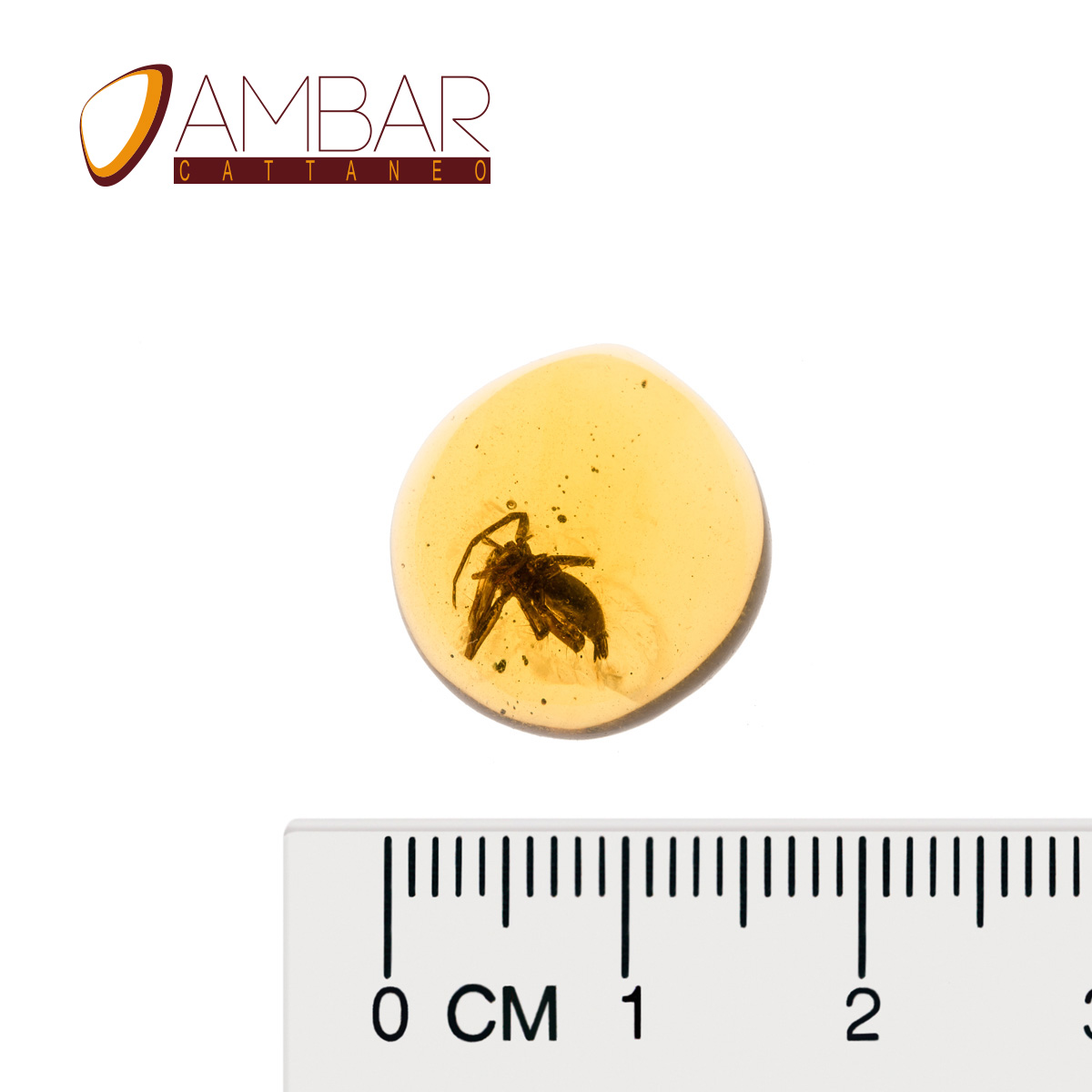 Mexican Amber
