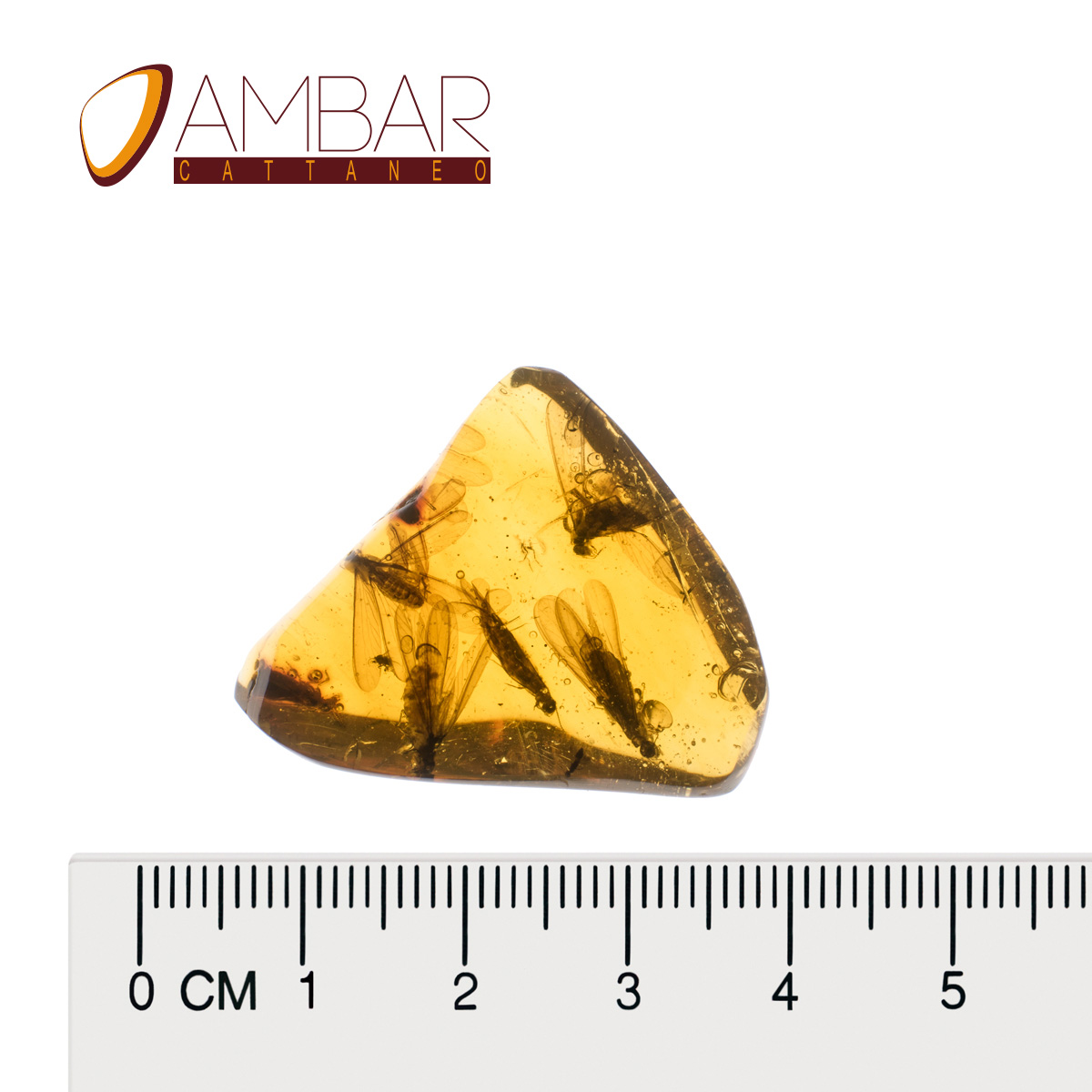 Amber Mexican